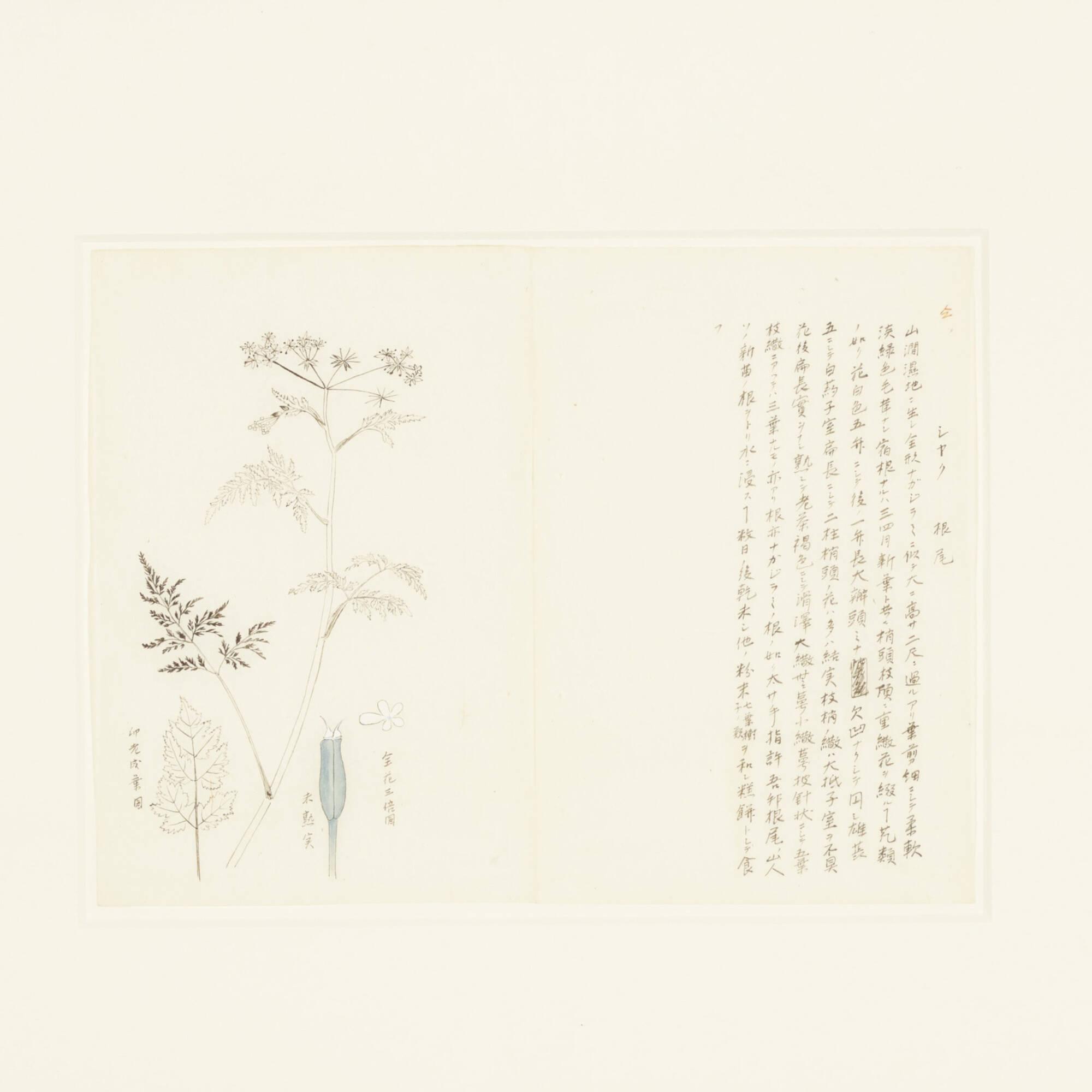 130: Japanese / botanical prints, set of six (3 of 3)