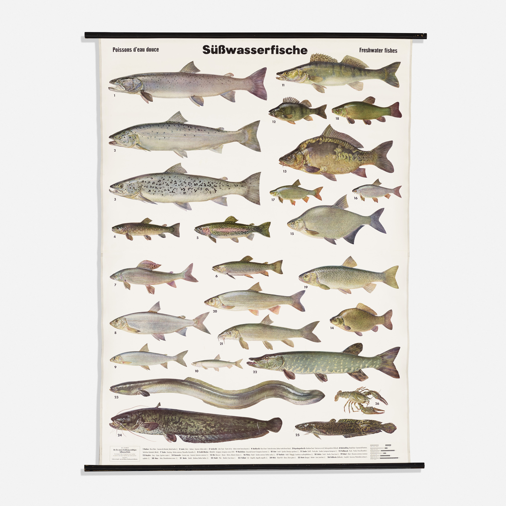134 german freshwater fish chart architectural artifacts inc