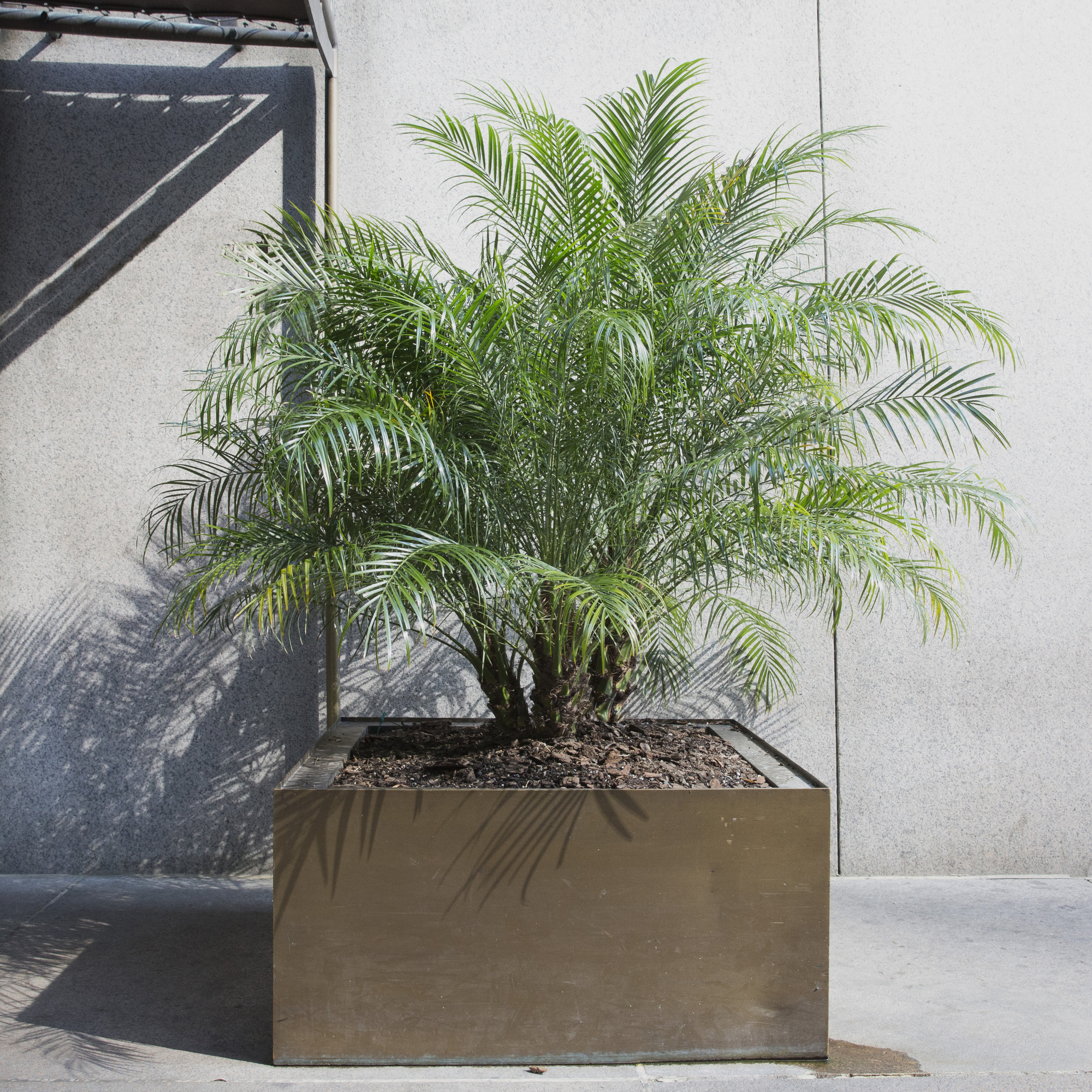 161:  / Planter from the entrance of The Four Seasons (1 of 1)